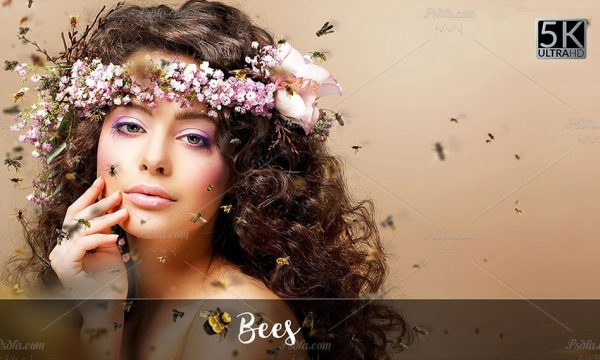 مجموعه 20 افکت پرواز زنبورهای عسل دوربری شده بر روی تصاویر با فرمت PNG