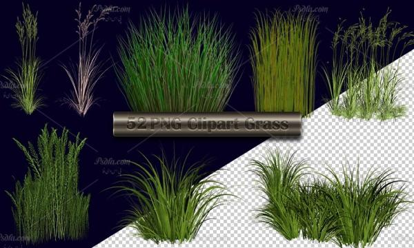 52 تصویر PNG چمنزار ، علفزار ، بوته و گندم زار دوربری شده با کیفیت بالا