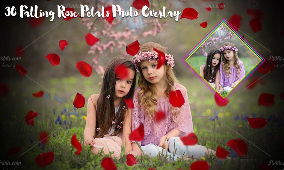 مجموعه افکت گل رز بر روی عکس و تصاویر با کیفیت بالا برای فتوشاپ