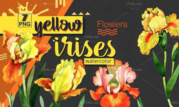90 طرح آبرنگی گل زنبق با فرمت PNG بدون بک گراند مناسب برای طراحی