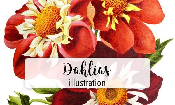 طرح خام نقاشی گل مناسب برای طراحی گرافیک با فرمت PNG