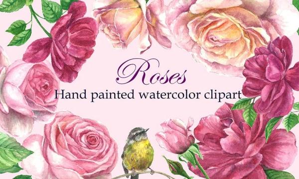 مجموعه تصاویر نقاشی آبرنگی گل رز و پرنده بدون بک گراند با فرمت PNG