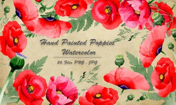 مجموعه عناصر طراحی گل خشخاشنقاشی شده بدون بک گراند با فرمت PNG