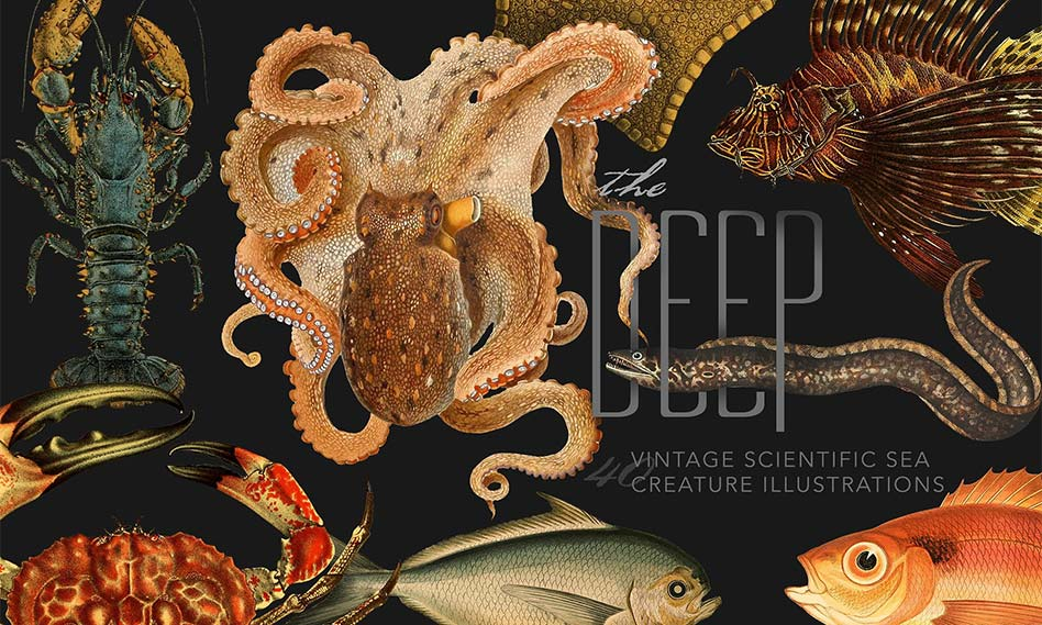 تصاویر طراحی شده انواع موجودات دریایی مناسب برای طرح های گرافیکی با فرمت PNG