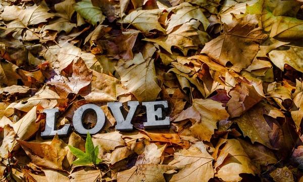 تصاویر با کیفیت برگ های رنگارنگ پاییزی به همراه عبارت Love از فتولیا