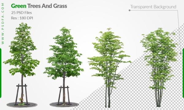 مجموعه تصاویر لایه باز انواع درخت ، بوته ، چمن و درختچه با فرمت PSD