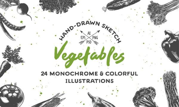 وکتور سبزیجات نقاشی شده با کیفیت بالا مناسب برای طراحی