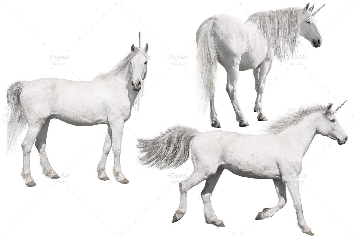 PNG اسب شاخدار دوربری شده