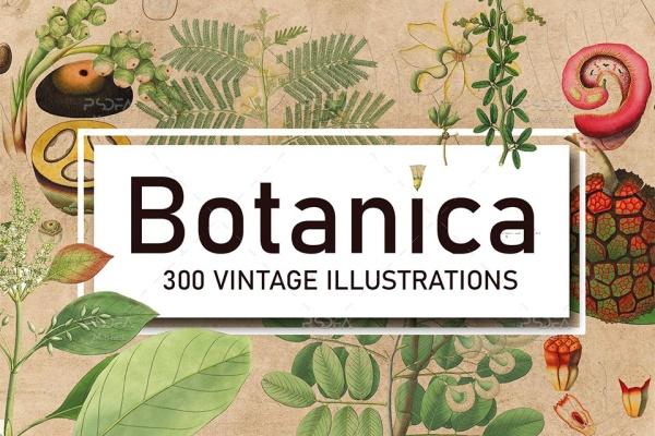تصاویر گیاهان و گیاهشناسی با طرح وینتج یا قدیمی و کیفیت بالا