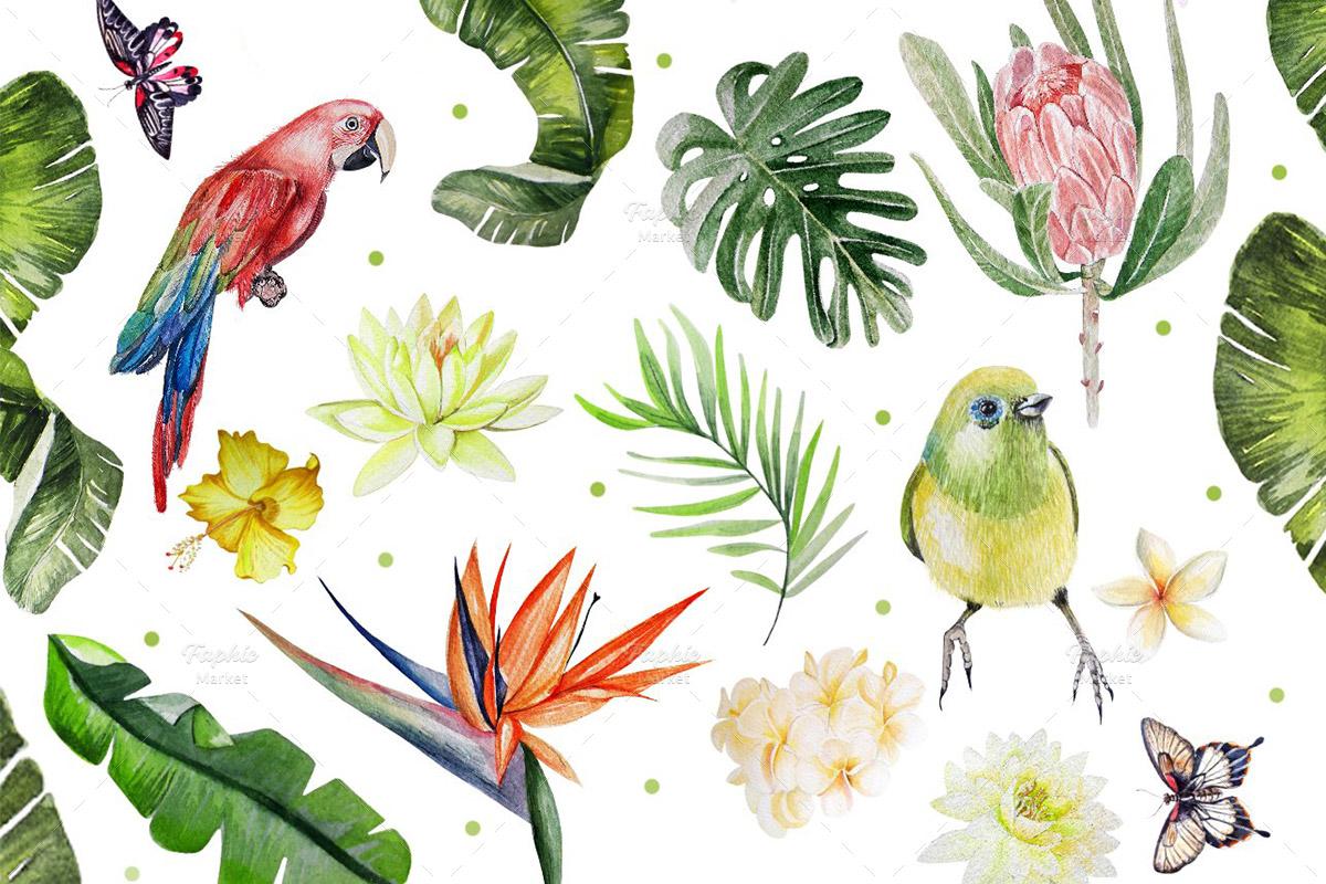 کلیپ آرت آبرنگی گیاهان و پرندگان گرمسیری