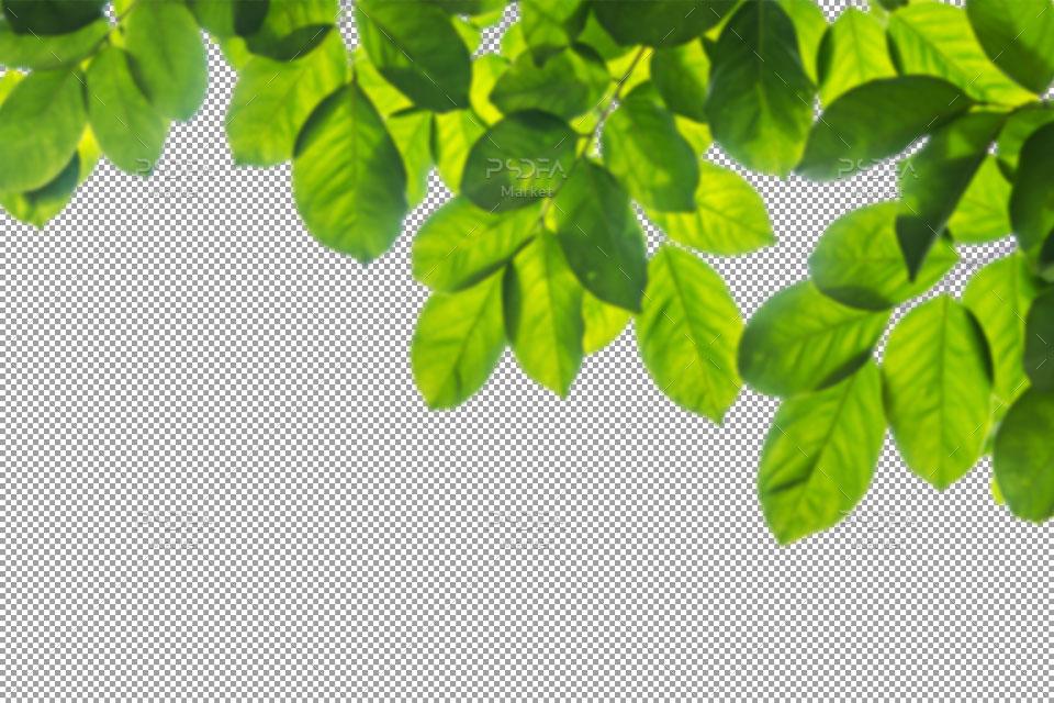 40 افکت شاخه و برگ درخت سبز ترنسپرنت