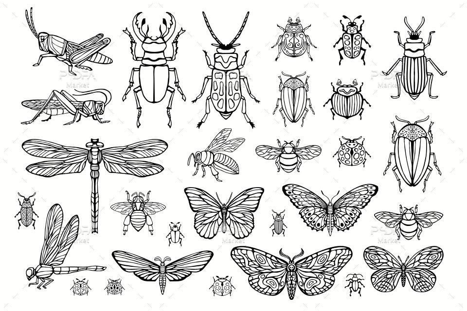 وکتور حشرات سوسک، مگس، پروانه، ملخ، زنبور، سنجاقک